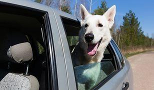 Pies zamknięty w samochodzie
