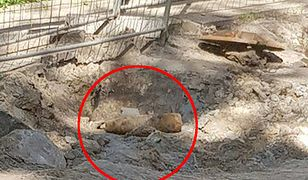 Pocisk artyleryjski został odkryty przez pracujących na miejscu robotników