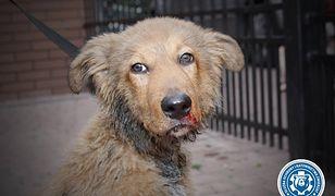 Uratowany pies był kopany przez swoje właścicielki