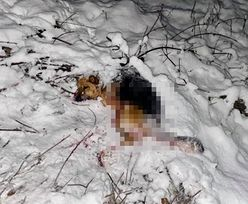 Makabra na Dolnym Śląsku. Pies zrzucony z wiaduktu