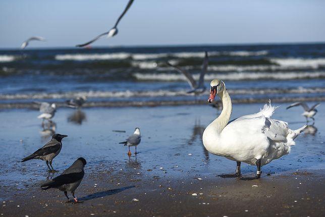 Przebywając na plaży czy w okolicach zbiorników wodnych, należy pamiętać, że żyłki, haczyki i ciężarki wędkarskie to także śmieci i to niebezpieczne