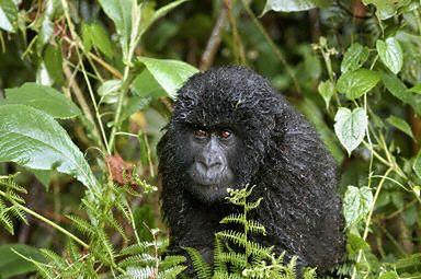 Nieznane gatunki - kto je odkryje?