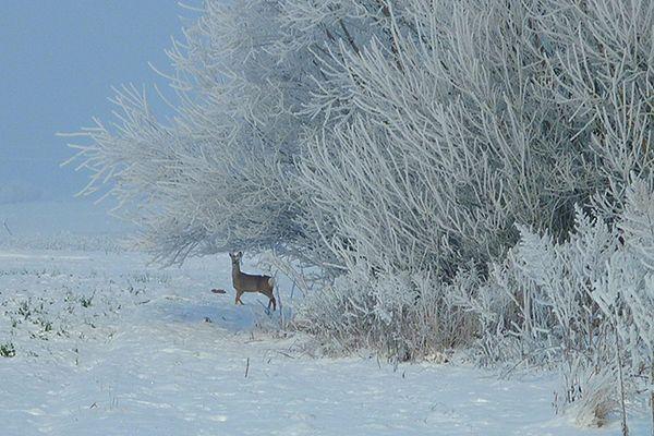 Leśnicy będą pomagać zwierzętom przetrwać zimę