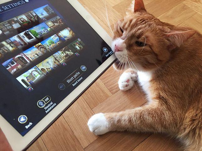 Na Facebookowej stronie Acram można znaleźć zdjęcia kota. On również nie wydaje się zachwycony zachowaniem pracownika.