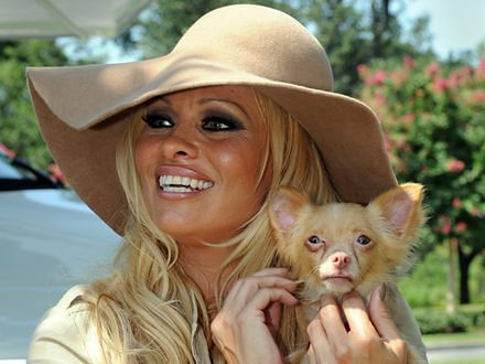 Pamela Anderson nie da się już pokroić