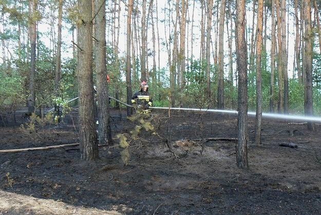 17 razy podpalał lasy w okolicach Konina. Nie wie, dlaczego to robił