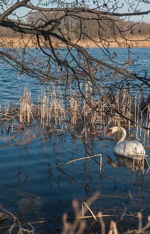 Dolina Baryczy to ostoja ptaków wodnych