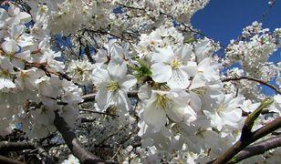 Pogoda długoterminowa z IMGW. Prognoza na kwiecień i maj może bardzo zdziwić