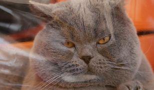 Powstał nowy biznes. Handlowcy importują niemiecką karmę dla kotów