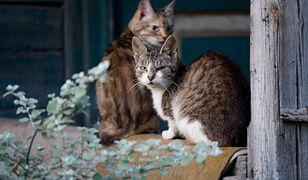 Koty znalezione w domu starszej kobiety były już martwe