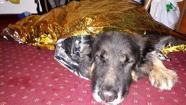 GOPR uratował wykończonego psa