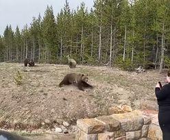 Chciała zrobić zdjęcie niedźwiedziom grizzly. O mały włos nie zginęła