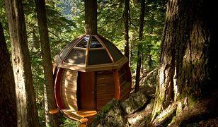 Sekretny domek na drzewie