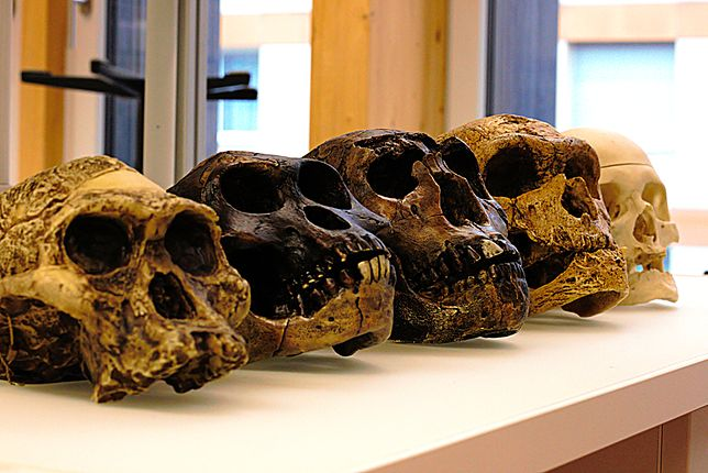 Zdaniem badaczy z Eindhoven University of Technology, żadna ze społeczności neandertalskich nie miała szans na przetrwanie.