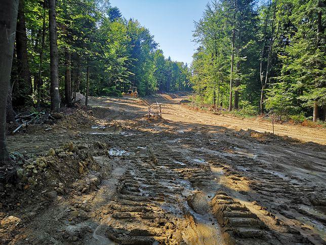 Pierwsze rozczarowanie – drogi, których nie było. Gdzieś nieopodal żółty szlak przecina czerwony szlak beskidzki, sierpień 2019 r.