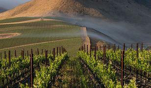 Globalne ocieplenie kontra alkohol. Ulubione trunki zagrożone