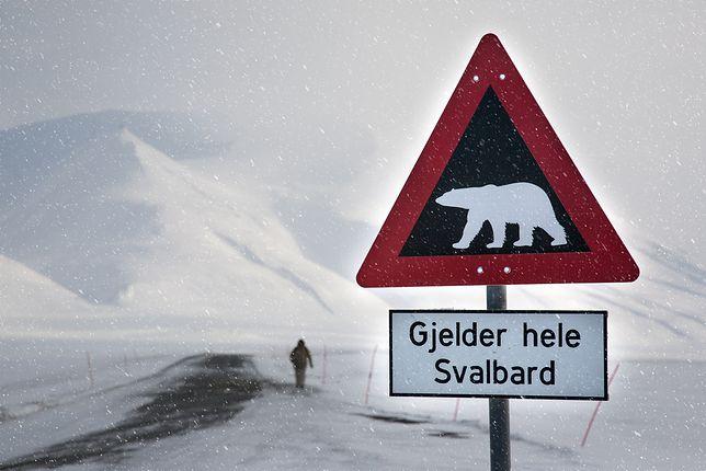 Norwedzy drwią z Australijczyków. Poszło o ostrzeżenie przed atakami niedźwiedzi