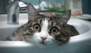 Czy jeśli kot przyjmuje kształt naczynia, do którego wejdzie, to jest płynem? Rozdano Ig Noble 2017!