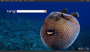 Bing przyspiesza pracę... Internet Explorera