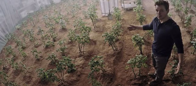 Warzywa wyhodowane na Marsie będą się nadawać do jedzenia