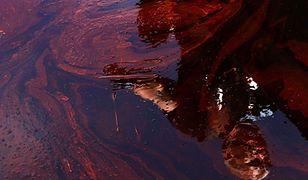 Będzie powtórka katastrofy? Ropa naftowa znów w zatoce