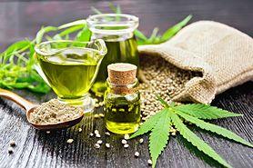 Olej konopny - właściwości, działanie, zastosowanie w medycynie i kosmetyce