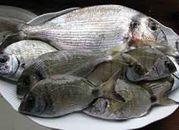 Polacy najchętniej jedzą pangi i tilapie - bo są tanie