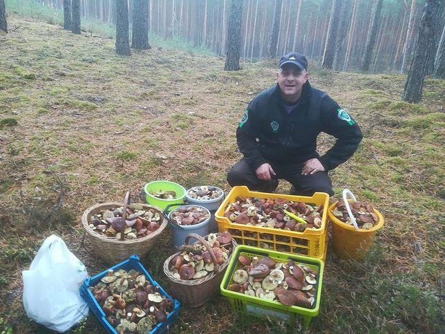 Nowy wysyp grzybów w Polsce. Tyle można zebrać w Puszczy Noteckiej