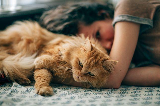 Koty są najpopularniejszymi zwierzętami domowymi.