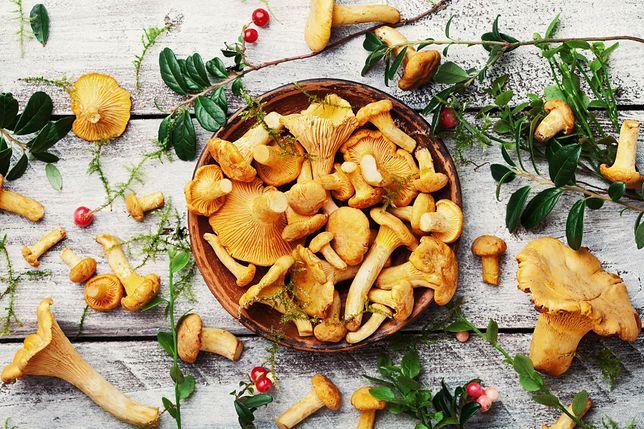 Leśny przysmak na talerzu. Jak prawidłowo obchodzić się z kurkami?