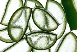 Ekstrakt z aloesu - właściwości i zastosowanie, aloes w kosmetyce
