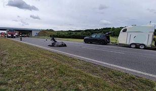 Koń złamał nogi na autostradzie. Wstrzymano ruch