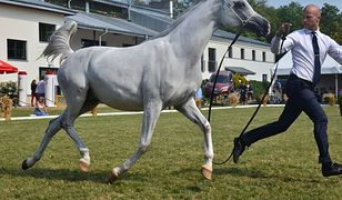 Pride of Poland: Będą duże zmiany w warunkach aukcji koni