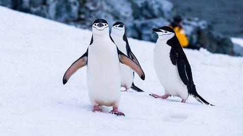 Linux 5.1: Pamięć trwała jako RAM, Fastboot i wiele innych nowości