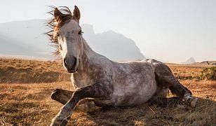 Konkurs National Geographic Traveler Photo 2014