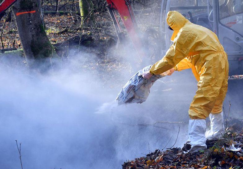 W Polsce wykryto nowe ogniska groźnej choroby. Nie ma na nią szczepionki