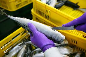 Ryby coraz bardziej toksyczne. Naukowcy ostrzegają przed metylortęcią