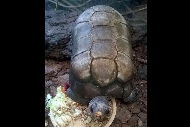 Z poznańskiej palmiarni skradziono żółwia. Jest bardzo charakterystyczny. Pracownicy zoo proszą o pomoc