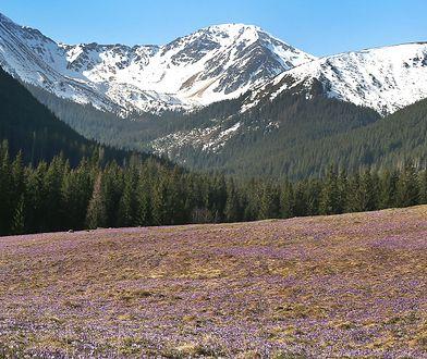 Pogoda. Powrót zimy i 44 cm śniegu w Tatrach. Ostrzeżenie dla turystów