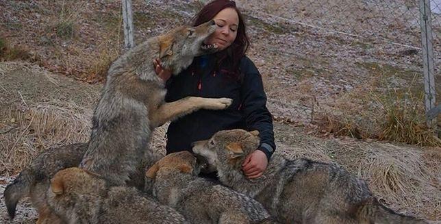 Oko w oko z wilkiem. W tym parku zwiedzający mogą zaprzyjaźnić się z drapieżnikami