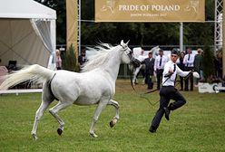 Pride of Poland jednak się odbędzie. Jest oświadczenie