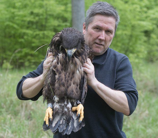 """Bohater ratujący orła. """"Nie zrobiłem tego dla paru euro"""""""