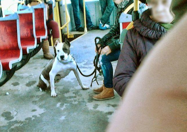 Pies w środkach lokomocji