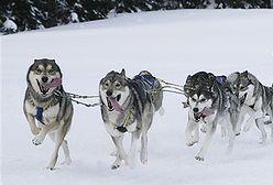 Psie wyścigi
