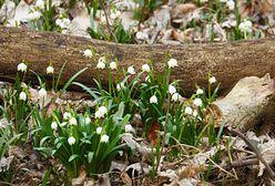 Kiedy nadejdzie wiosna? Nowa prognoza prosto z IMGW na Śnieżce
