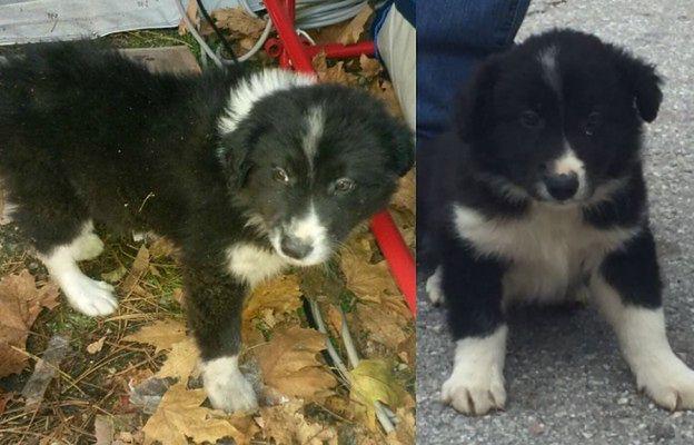 Pies uratowany z gruzów po trzęsieniu ziemi sam został ratownikiem