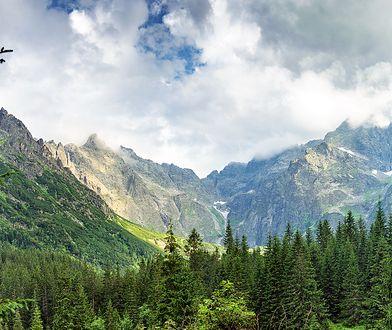 Volvo posadzi w Tatrach 12 tys. nowych drzew