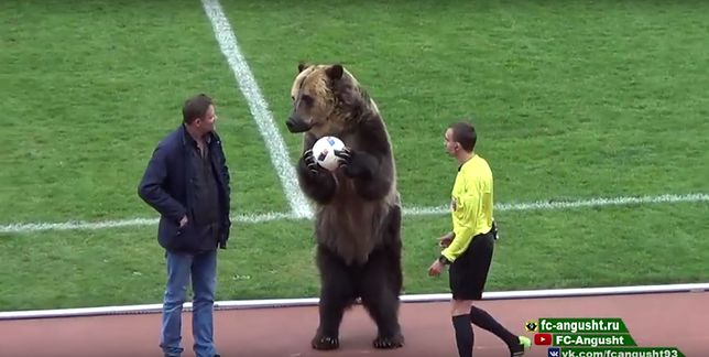 W Rosji mecz piłkarski rozpoczął... niedźwiedź