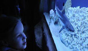 Oceanarium w Toruniu