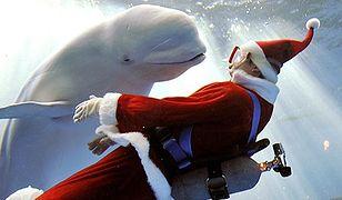 Boże Narodzenie pod wodą
